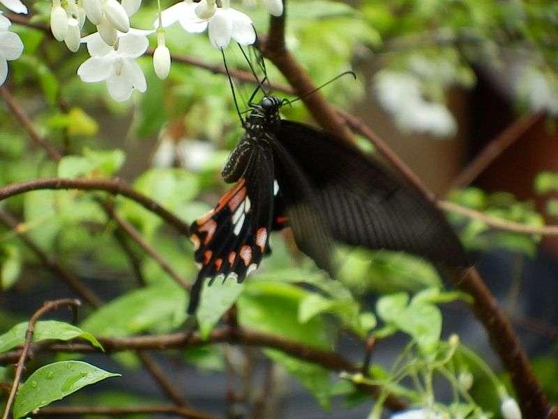 hier eines von 75 Serienbildern - Schmetterling -